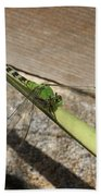Eastern Pondhawk On A Leaf Bath Towel