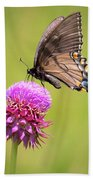Eastern Tiger Swallowtail Dark Form  Hand Towel