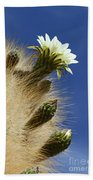 Echinopsis Atacamensis Cactus In Flower Bath Towel