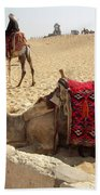 Egypt - Camel Getting Ready For The Ride Bath Towel