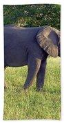 Elephant Feeding Bath Towel
