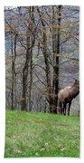 Elk, Blue Ridge Mountain Bath Towel