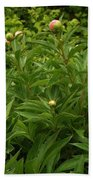 Emergence        Peony         May            Indiana Bath Towel