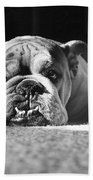 English Bulldog Bath Towel