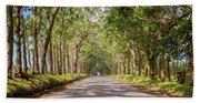 Eucalyptus Tree Tunnel - Kauai Hawaii Hand Towel