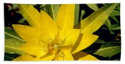Euphorbia Wallichii Hand Towel