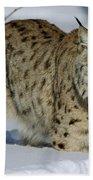 Eurasian Lynx  In Snow Bath Towel