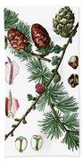 European Larch, Pinus Larix Bath Towel