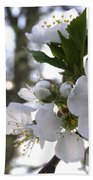 Evening Show - Cherry Blossoms Bath Towel