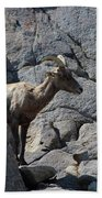 Ewe Bighorn Sheep Bath Towel