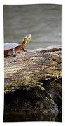 Exploring Turtle Bath Towel
