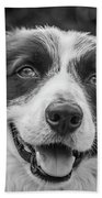 Expression Of A Border Collie Bath Towel
