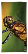 Eye To Eye Dragonfly Bath Towel