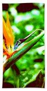 F21 Bird Of Paradise Flower Hand Towel
