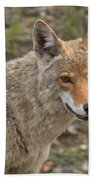 Face Of The American Coyote Bath Towel