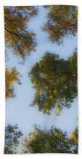 Fall Canopy In Virginia Bath Towel