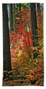 Fall Forest Splendor Bath Towel