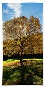 Fall Tree Silhouette Kent Falls State Park Connecticut Bath Towel