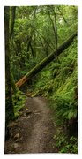 Fallen Tree On The Trail Bath Towel