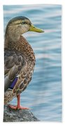 Female Mallard At The River Bath Towel