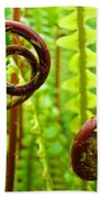 Fern Fronds Fine Art Photography Forest Ferns Green Baslee Troutman Bath Towel