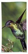 Fiery-throated Hummingbird Panterpe Bath Towel