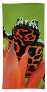Fire-bellied Toad Hand Towel