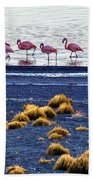 Flamingos At Torres Del Paine Bath Towel
