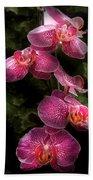Flower - Orchid - Phalaenopsis - The Cluster Bath Towel