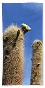 Flowering Echinopsis Atacamensis Cactus Bolivia Bath Towel