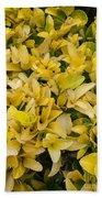 Flowers Of Domitilla Hand Towel
