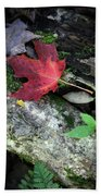 Forest Floor In Autumn Bath Towel