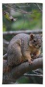 Fox Squirrel On A Branch  Bath Towel