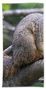 Fox Squirrel On A Branch - Southern Indiana Bath Towel