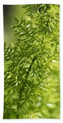 Foxtail Fern In Spring Bath Towel