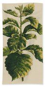 Frosted Thorn, Crataegus Prunifolia Variegata Bath Towel