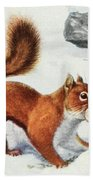 Fuertes, Louis Agassiz 1874-1927 - Burgess Animal Book For Children 1920 Red Squirrel Bath Towel