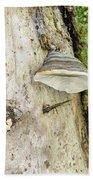 Fungus Grows On A Tree Trunk Bath Towel