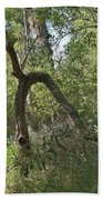 Funky Tree On Trail In Peters Canyon Bath Towel