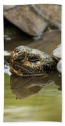 Galapagos Giant Tortoise In Pond Behind Another Bath Towel