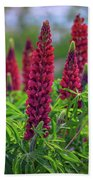 Gallery Red Lupines Bath Towel