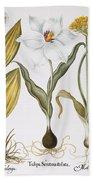 Garlic, 1613 Hand Towel