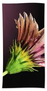 Gazania On Dark Background 2 Bath Towel