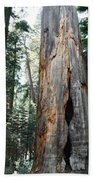 General Grant Grove Sequoia Bath Towel