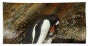 Gentoo Penguin Feeding Chicks Bath Towel
