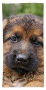 German Shepherd Puppy II Bath Towel