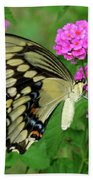 Giant Swallowtail Butterfly  IIi Bath Towel