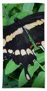Giant Swallowtail Butterfly Bath Towel