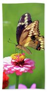 Giant Swallowtail Butterfly On Pink Zinnia Bath Towel