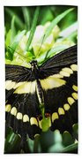Giant Swallowtail Bath Towel